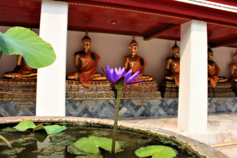 Water lilies in front of gilded Buddha statues at Wat Pho, Bangkok