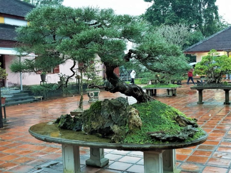 Garden behind the temple with bonsai trees