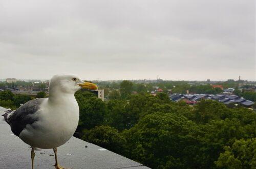 A bird's eye view of Tallinn