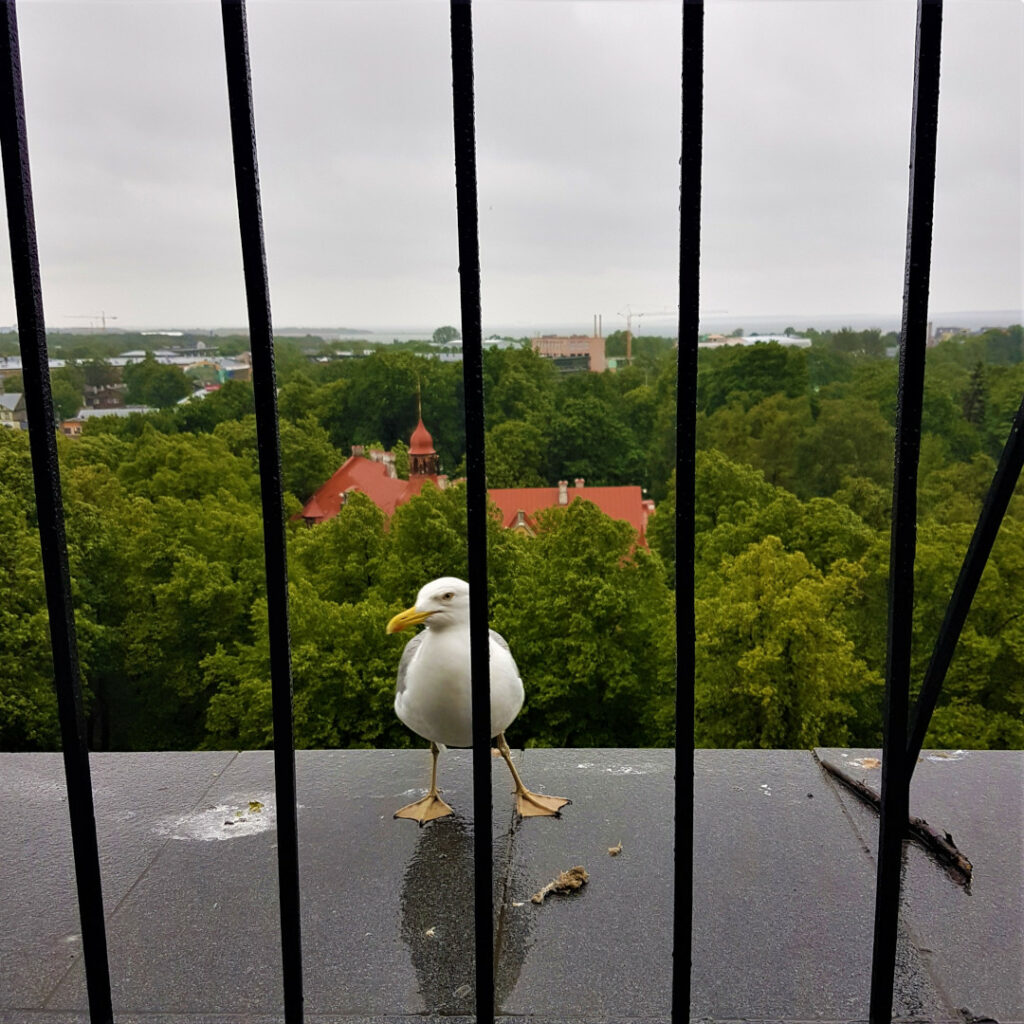 A seagull offers an interesting point of view of a beautiful city.
