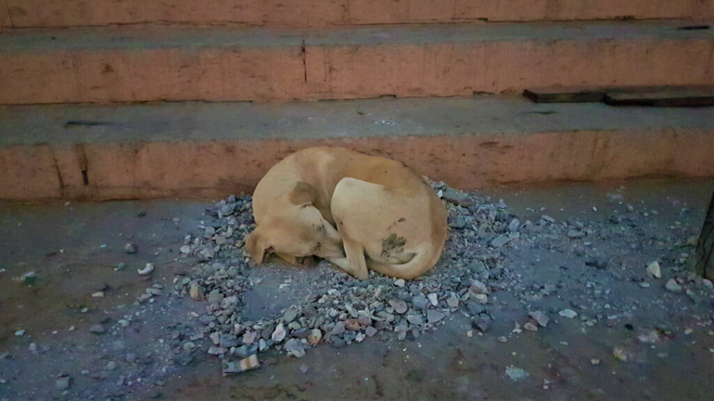 A stray dog sleeps on a pile of ashes to keep itself warm