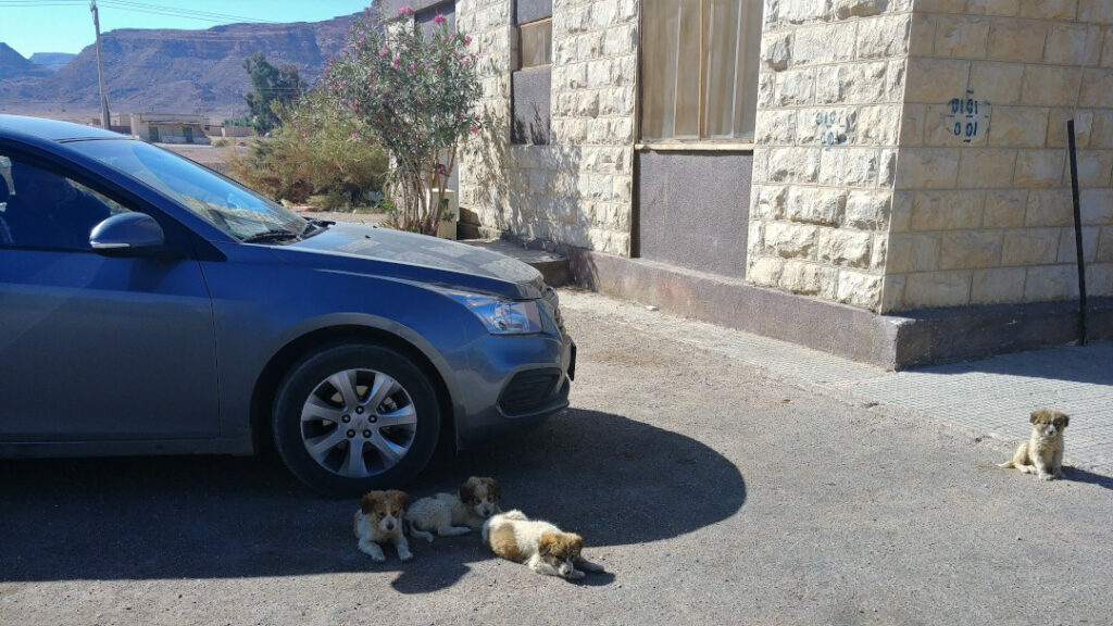 Street pups near the train from the movie