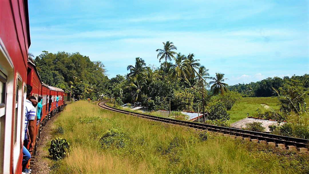 The train to Kandy passing through paddy fields in the lowlands