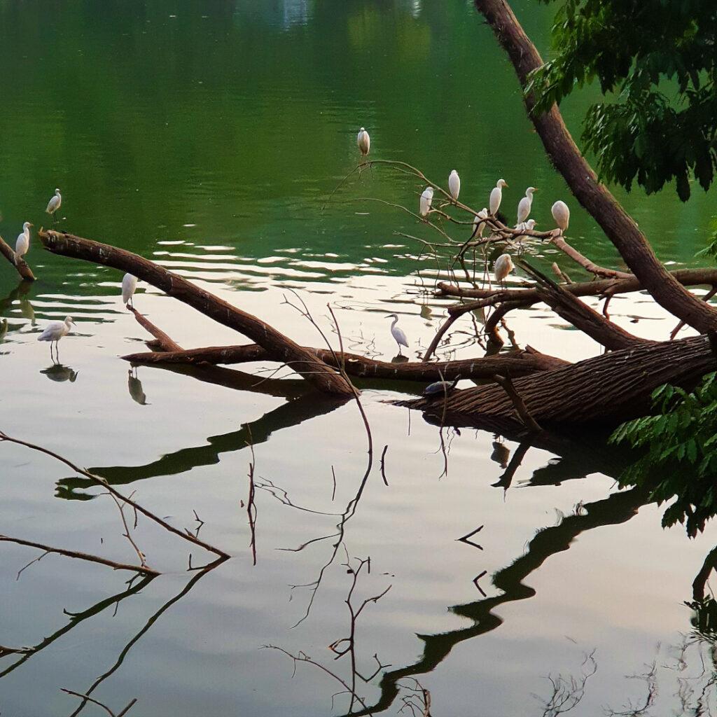 Storks nestling on the branches