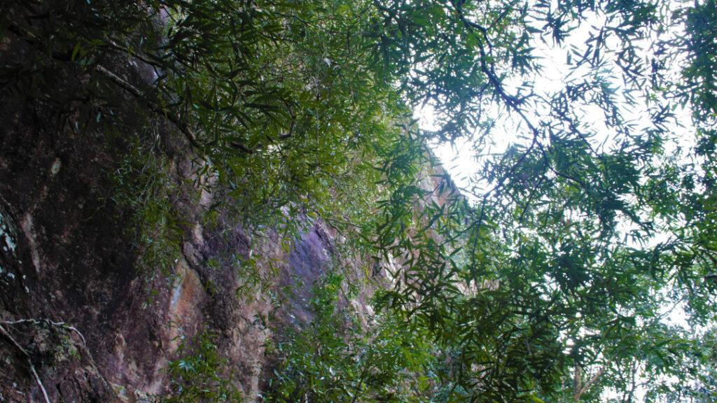 Hiking uphill entails passing through lush greenery