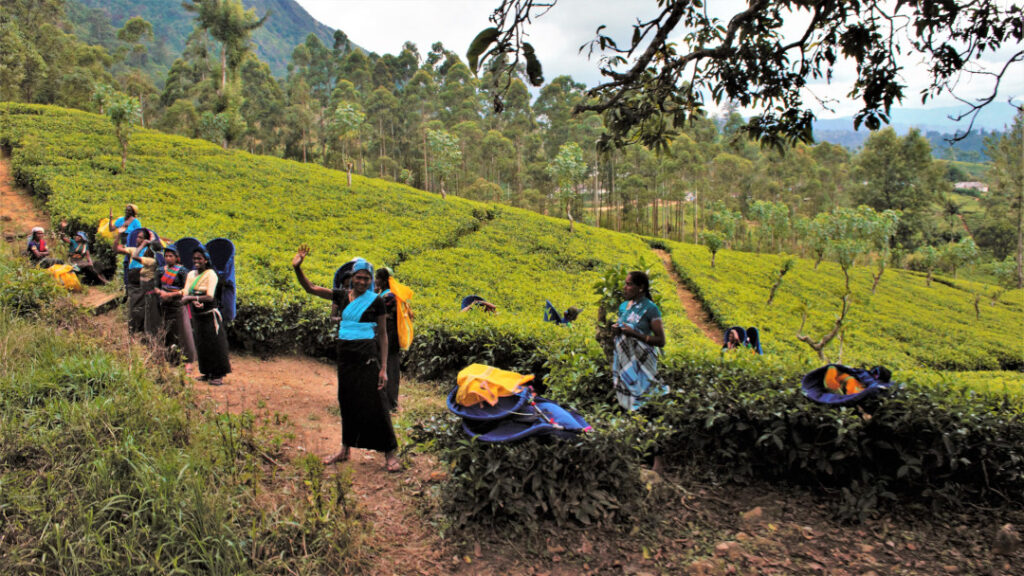 Tea pickers in the plantation waving as the train passes by